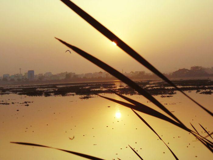 Sunrise And Trees Sunrise And Lake Sunrise Sunrise And Birds Hyderabad,ındia
