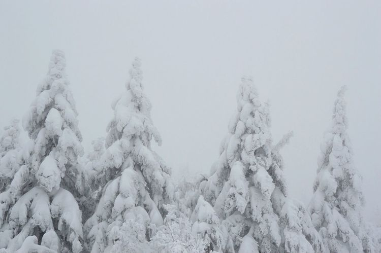 Snow Mountain Beautiful Nature Trees Tree Hoarfrost Get Inspired Deepfreeze Snow ❄ Snow From My Point Of View EyeEm Nature Lover Nature Photography EyeEm Best Shots - Nature Nature Nikon D3200 Winter Japan Mountains Mount Zao, Yamagata Soft Rime