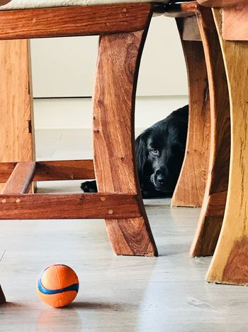 #gallagher #dogs #ball #eyesontheprize Dog EyeEm Selects Indoors  Architecture Ball No People Sport Wood - Material Animal Pets One Animal