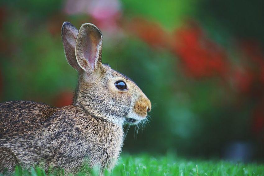 It's a Bun Bun Bunny  Rabbit Cute Animal Check This Out EyeEm Nature Lover Still Life Beautiful