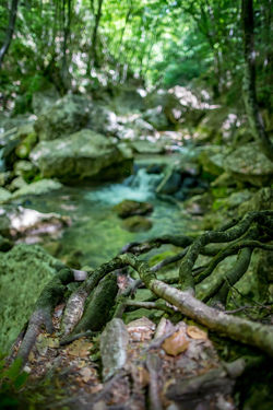 Beauty In Nature Close-up Day Food Food And Drink Forest Freshness Green Color Growth Land Moss Nature No People Outdoors Plant Plant Part Selective Focus Tree Water