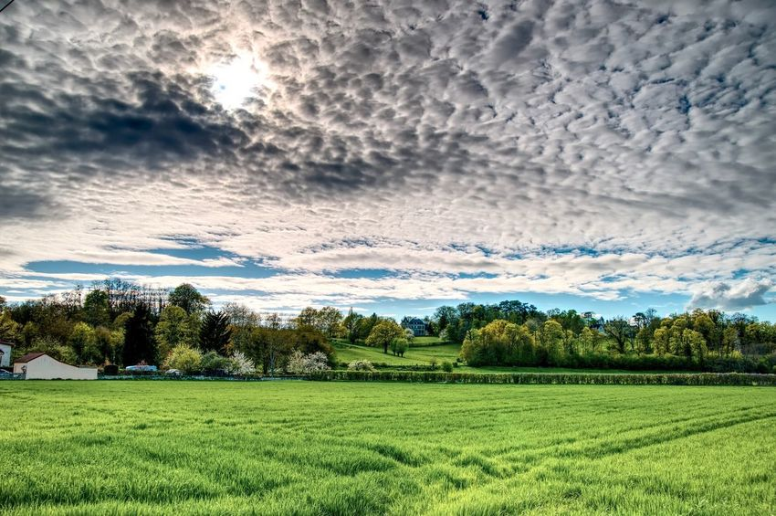 Allier Agriculture Beauty In Nature Cloud - Sky Day Environment Field Grass Green Color Growth Land Landscape Nature No People Outdoors Plant Rural Scene Scenics - Nature Sky Tranquil Scene Tranquility Tree The Great Outdoors - 2018 EyeEm Awards
