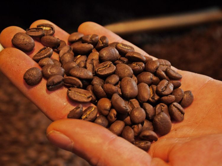 Brown Close-up Coffee Bean Day Focus On Foreground Food Food And Drink Freshness Group Of Objects Holding Human Body Part Human Finger Human Hand Indoors  Large Group Of Objects Nature One Person Quality Check Raw Coffee Bean Real People Roasted Coffee Bean