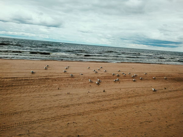 Beach Sand Sea Nature Outdoors Large Group Of Animals Animals In The Wild No People Scenics Sky Animal Themes Day Tranquility Horizon Over Water Beauty In Nature Water Bird Colony Landscape Perspectives On Nature Summer Exploratorium