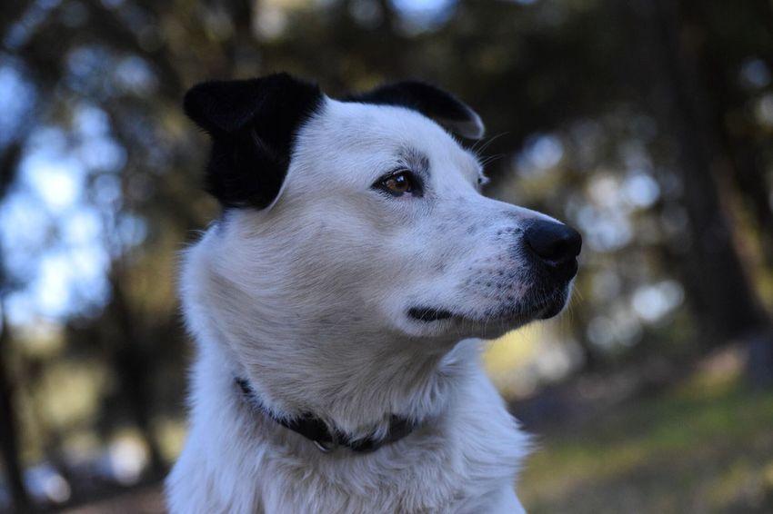 Anna Dog FarmAnimal Farmland Animal Pet Anna Cute Aussie Cattledog Mixdog Dogs Outdoors Outdoor Photography Love
