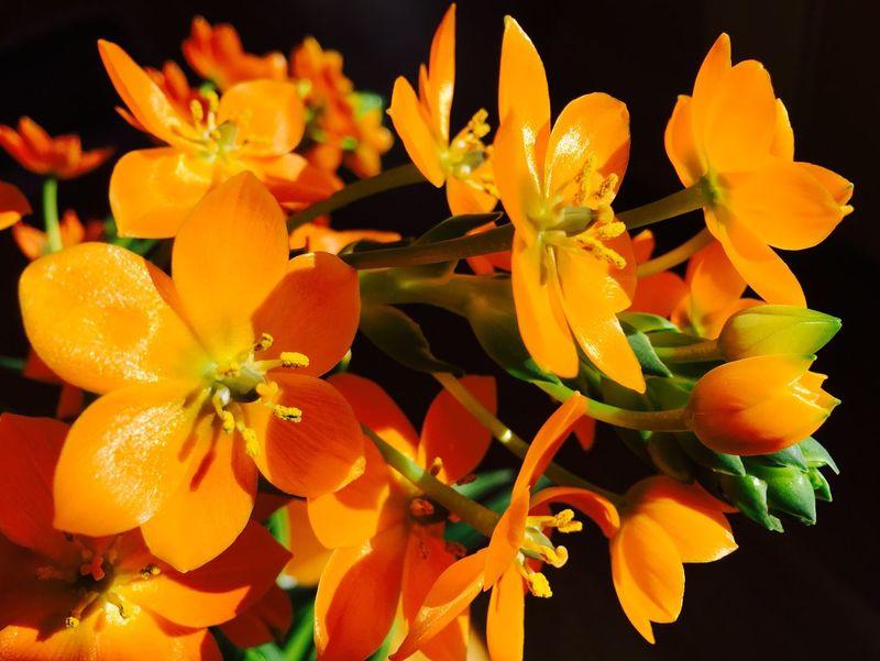 Orange Color Orange Flower Flowers Flower Collection Sun Star