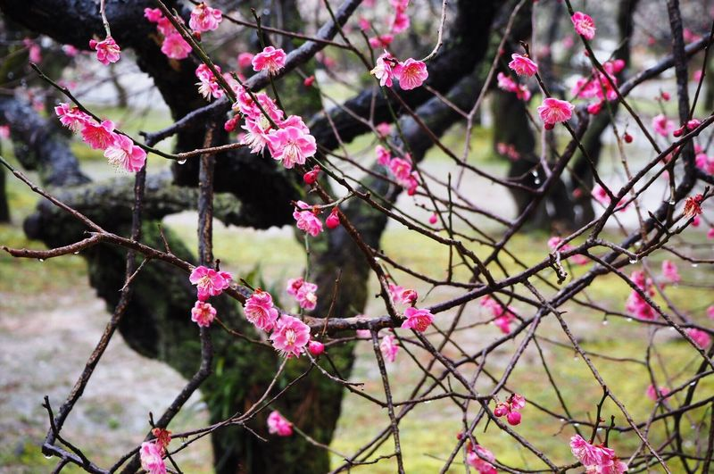Close-up of pink flowers on branch