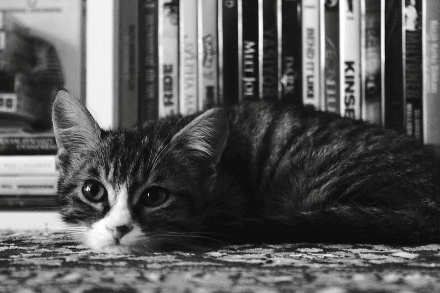 Mycat Mycat♥ Mycat❤ Mybaby Mybaby❤ Kitten Cat Cat♡ Catlover Babycat Babycat🐱 Love Love ♥ Loveanimals Serenity Blackandwhite Blackandwhite Photography Animallover Pets Animal Themes One Animal Perfection Lovely Lovelycat Lovely Cat 😻