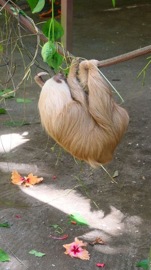 sloth Flower Snout Animal Themes Animals In The Wild Sloth Photography No People Nofilter Yellow Pets Brown Lumix