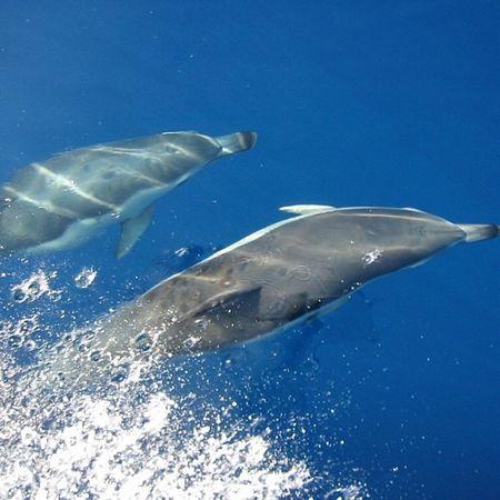 #delfin #dolphin #meer #sea #blau #blue #mediterranean #mittelmeer