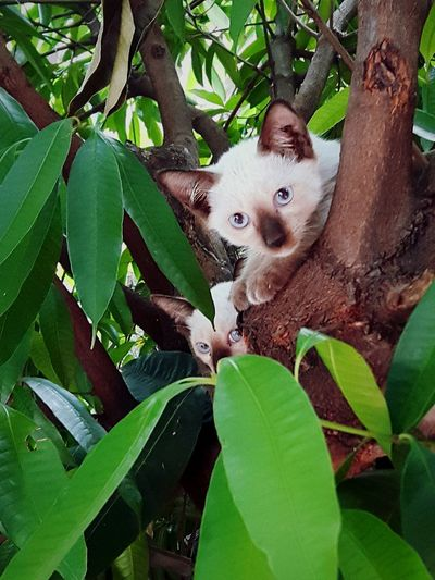 Cat Climbing A Tree Leaf Tree Trunk Close-up Plant Green Color
