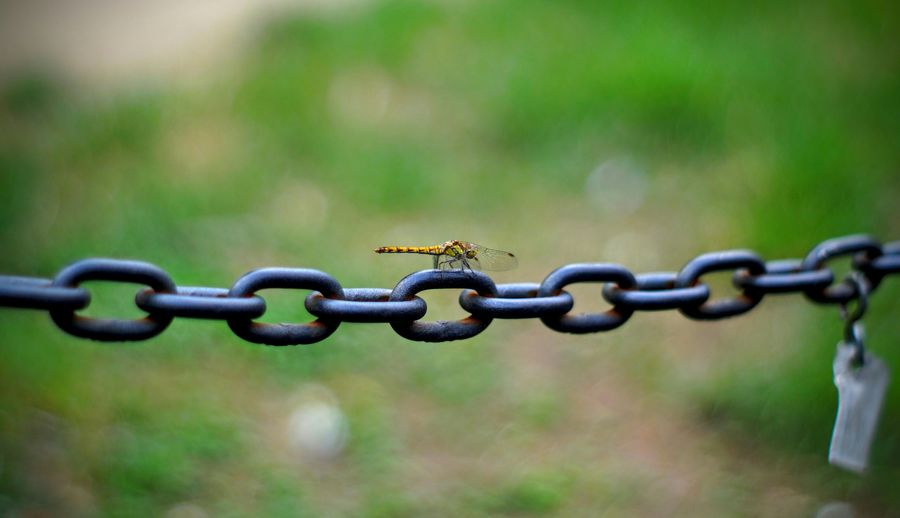 Dragonfly on chain over field