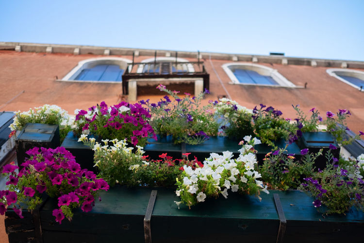 Flower Flowering Plant Plant Architecture Building Exterior Nature Built Structure No People Freshness Day Growth Potted Plant Vulnerability  Beauty In Nature Sky Pink Color Building Fragility Outdoors Multi Colored Window Box Flower Head Flower Pot