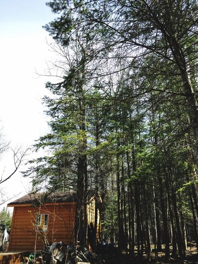 Summertime Day Shed Forest Cabin Tree Nature Low Angle View Outdoors Growth Day Tree Trunk No People Sky Building Exterior Beauty In Nature Architecture Forest Branch
