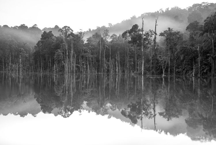 Tree Reflection Tranquility Water Lake Plant Tranquil Scene Beauty In Nature Scenics - Nature Nature Day Sky Waterfront No People Non-urban Scene Growth Outdoors Reflection Lake Forest Rainforest Jungle Blackandwhite Fog Tree