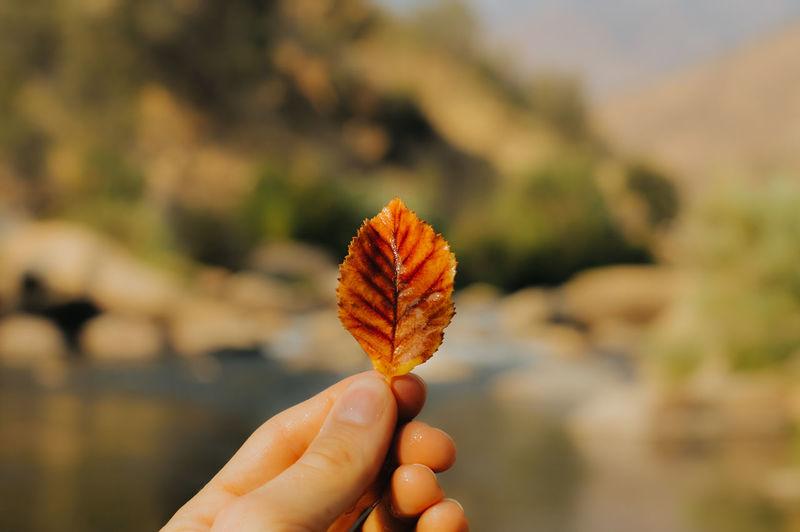 Close-up of hand holding orange leaf