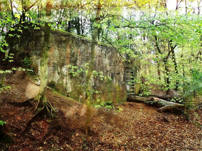 Outdoors No People Green Color Bunker Lost Places Forest Beauty In Nature WoodLand Nature