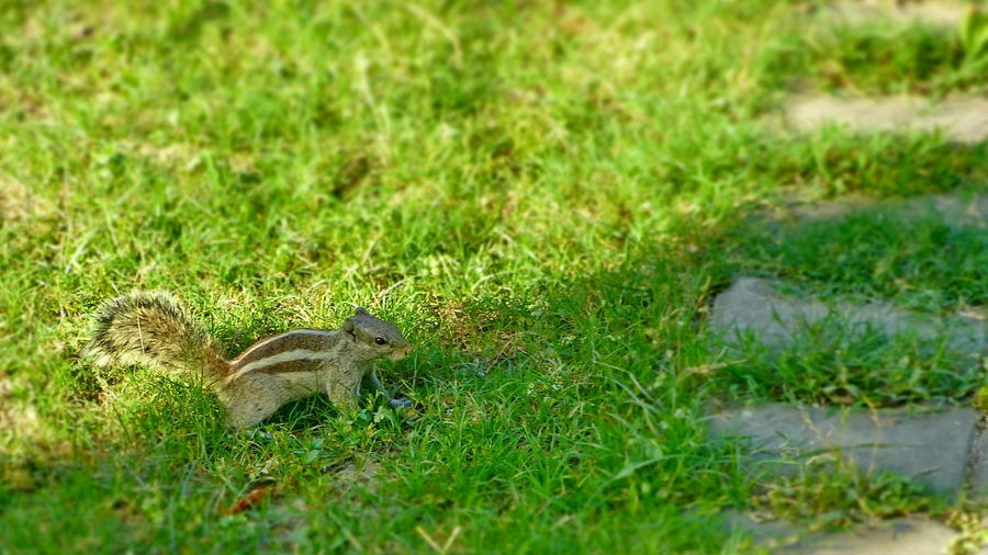 Cute Squirrel Squirrel Garden Squirrel Lawn Squirrel First Eyeem Photo