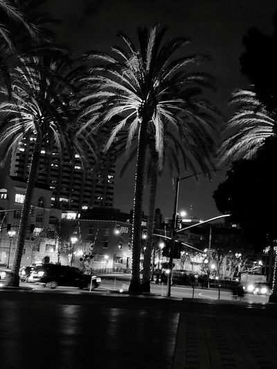 outside the Hyatt Manchester Grand in San Diego, CA Nopeople Palm Tree Palm Blackandwhite Black And White Blackandwhite Photography No People City Night Firework Display City Outdoors Illuminated Tree Cityscape