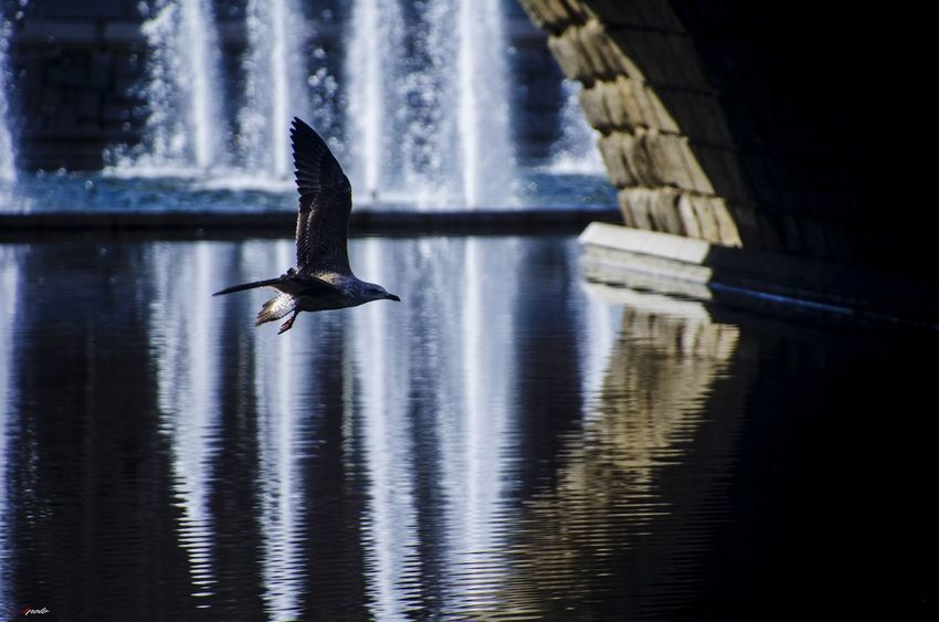 El vuelo #Nature  #madrid