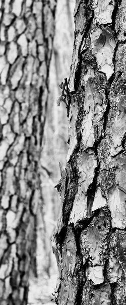 Hello World Check This Out Beauty In Nature Close-up Tree Trunk Selective Focus Noir Blackandwhite EyeEm Best Edits EyeEm Best Shots Eye4photography  EyeEmBestPics EyeEm Gallery Focus On Foreground Beauty In Nature What Do You Think?
