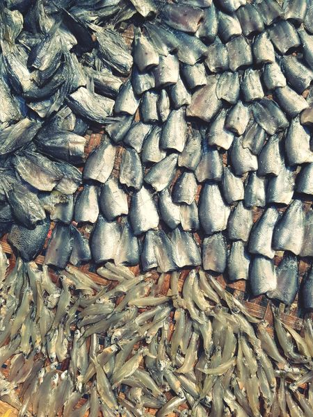 Fish Dry Fish Food Healthy Eating Food Preservation Food Preparation Full Frame Backgrounds Pattern Textured  Day No People Close-up Outdoors Nature