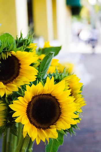 Sunflowers Flowerstand Flower Fragility Petal Freshness Yellow Flower Head Beauty In Nature Nature Sunflower Close-up Plant Outdoors Blooming Pollen No People Day Growth Focus On Foreground Bouquet First Eyeem Photo EyeEmNewHere