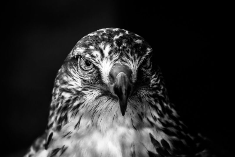 """""""The Hunter"""" Eye4photography  Check This Out Bw_collection EyeEm Best Shots"""