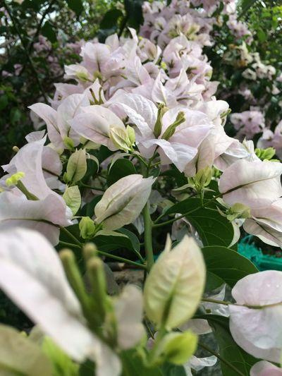 White flower Flowering Plant Flower Plant Growth Beauty In Nature Fragility Vulnerability