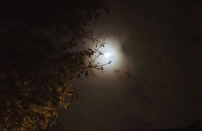 Spooktacular. Happy Halloween! WV Sky Parkersburg First Eyeem Photo Tree Fall Autumn Halloween