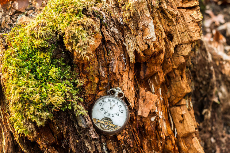 Close-up of clock on tree trunk