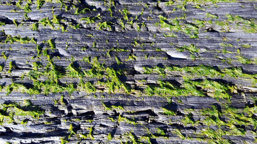 Backgrounds Full Frame Textured  Pattern Close-up Leaf Vein Moss Natural Pattern