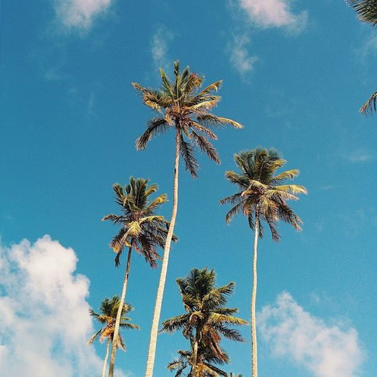 As high as you can. 🌴🌞🌴 Lookingup Palmtree Caribbean Nagua Viajard Itravelrd Vscocam Vscogrid Vscord Huntingplants Igersrepdom Instagramrd