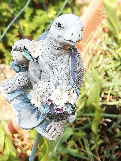 Bird Tortoise