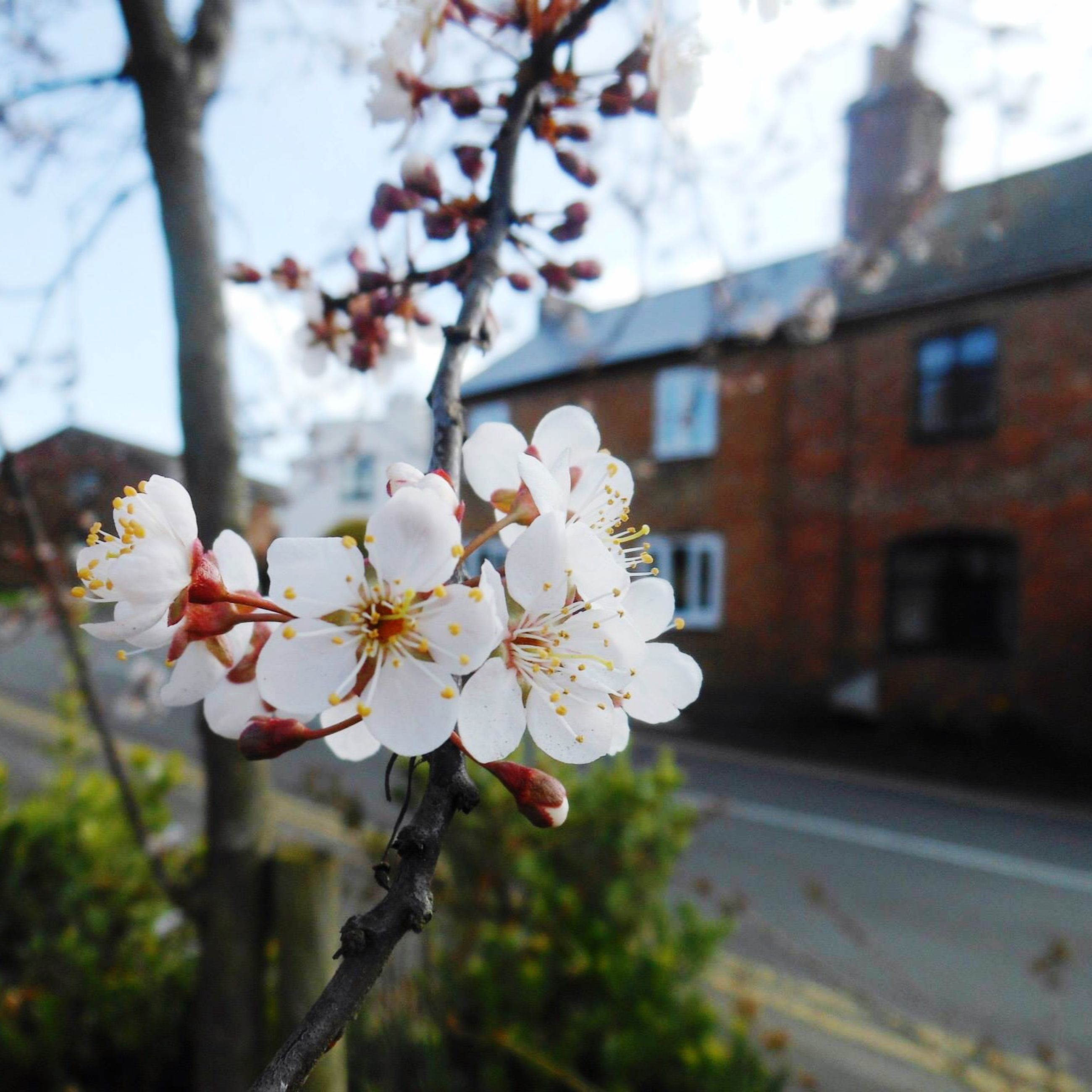 flower, freshness, branch, tree, fragility, growth, cherry blossom, focus on foreground, blossom, petal, cherry tree, building exterior, nature, beauty in nature, close-up, in bloom, built structure, apple blossom, fruit tree, twig