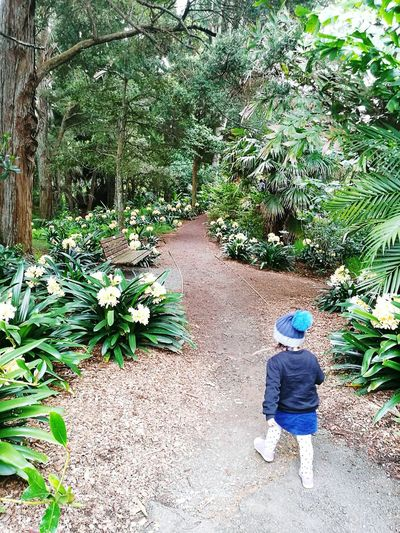 Auckland Botanic Garden My Baby Girl Beautiful Nature Photography Tree Photography Beauty In Nature Walkway Trees Plants And Flowers Mother Nature Native Trees Going For A Walk FamilyTime Outdoors Breeze Fresh Air Nature Outdoors Photograpghy  Day Taking A Stroll New Zealand Beauty