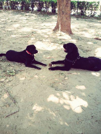 Bestfriends Doggyfriend Blacksnauzer Bagira Molly Blackteam 😘❤ Blackteam