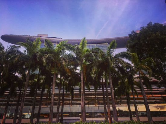 Tree Palm Tree Nature Sky No People Outdoors Built Structure Low Angle View Scenics Beauty In Nature Day Singapore Singapore City Singapore View Singapore Marina Bay Sands Hotel Sun