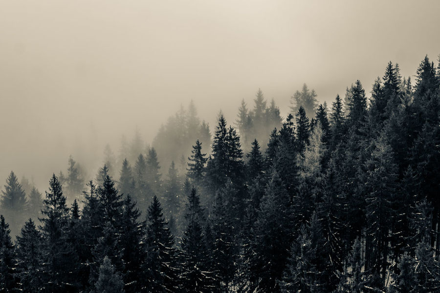 Earth Landscape_Collection Pensive Tranquility Wildlife & Nature Beauty In Nature Black Cold Temperature Day Fog Foggy Forest Mist Nature No People Outdoors Photography Sad Sky Tranquility Tree Wilderness