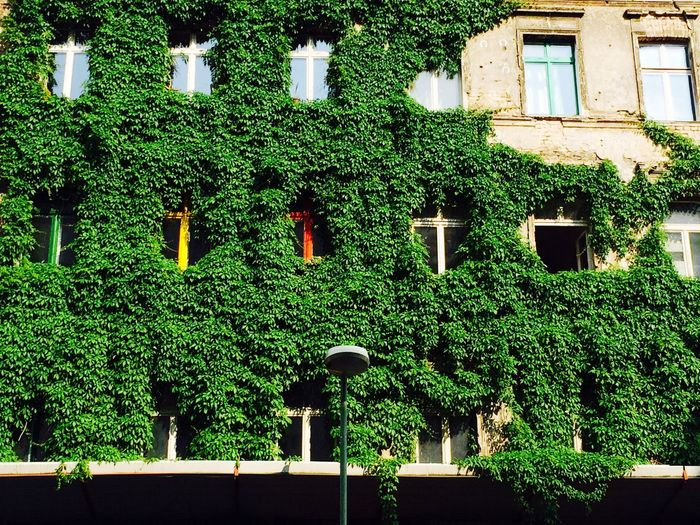 Tucholskystrasse Berlin Mitte Living Green Leaves Wall View From The Window... Grün In Der Stadt Façade