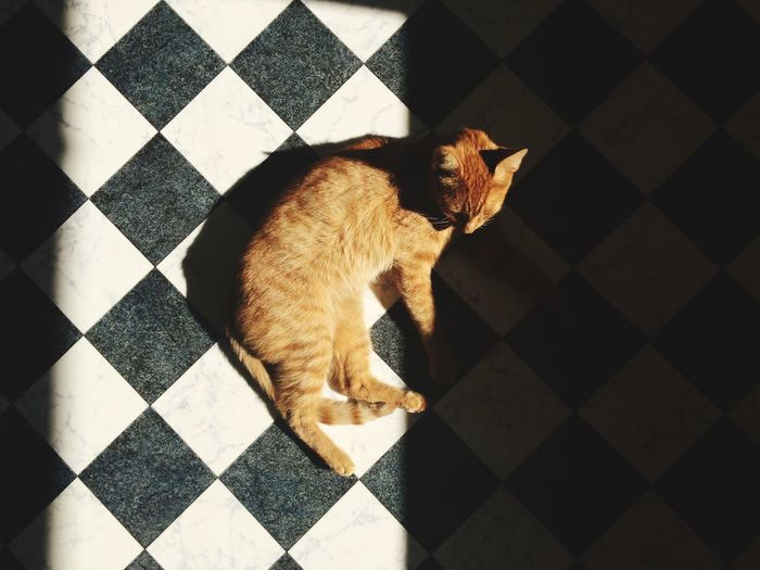 High angle view of cat resting on checked pattern floor at home