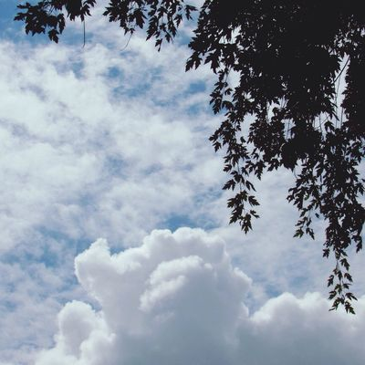Cloud watching ⛅️ Cloud - Sky Sky Low Angle View Tree Beauty In Nature Nature Scenics - Nature Tranquil Scene