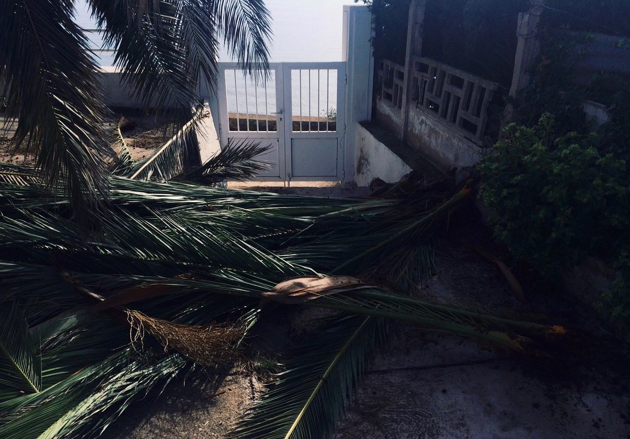 Palm leaves in yard of old house