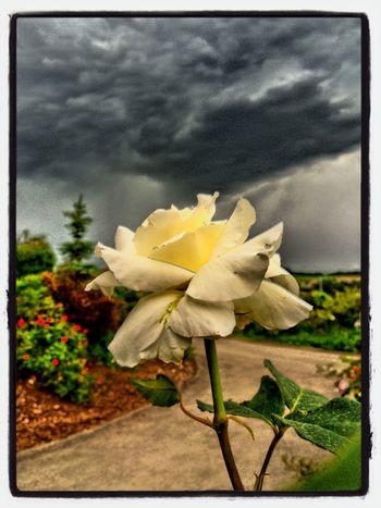 Dark Sky Storm