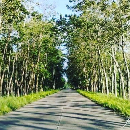 TreeLanao del sur The Way Forward Nature Diminishing Perspective Outdoors Forest Day Scenics No People Beauty In Nature Road Green Color Growth Grass Sky First Eyeem Photo