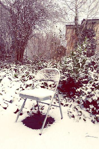 Winter Snow No
