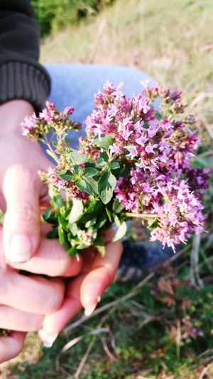 This flower can cure throat problem. Natural Medicine ❤ Flower Nature Holding Outdoors Plant Purple Close-up Herb Beauty In Nature Freshness Natural Medicine