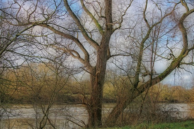 Tree Tranquility Bare Tree Land Nature Scenics - Nature Tree Trunk Branch Water Tranquil Scene Non-urban Scene Trunk Beauty In Nature Nature Photography Naturelovers Nature_collection Relaxing Time Relaxing Moments Calmness Calm River Beautiful Nature Riverside Natural Beauty Beautiful