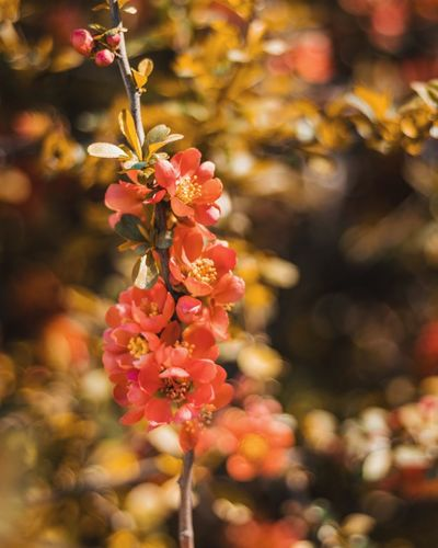 red spring Flower Head Flower Tree Branch Pink Color Autumn Springtime Blossom Close-up Plant Flowering Plant Plant Life Botany Botanical Garden Plant Part Tropical Flower Lilac In Bloom The Still Life Photographer - 2018 EyeEm Awards