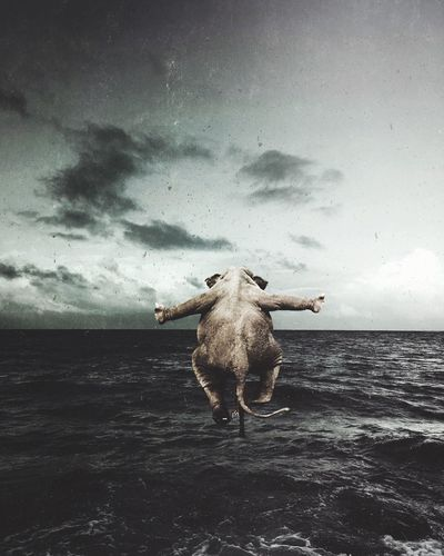 Cow standing on sea shore against sky